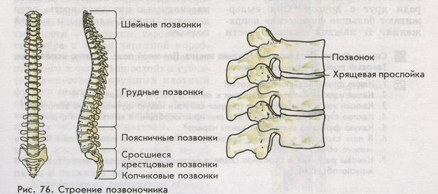 Лечение людей от глистов